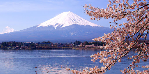 """And more infamously as the demon infested """"suicide forest."""" Majestic Mount Fuji"""