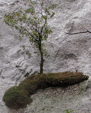 Photo: Tree on its own piece of land, Day 2. SX #2281