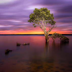 Mangrove Tree by Linda Brown - Landscapes Sunsets & Sunrises