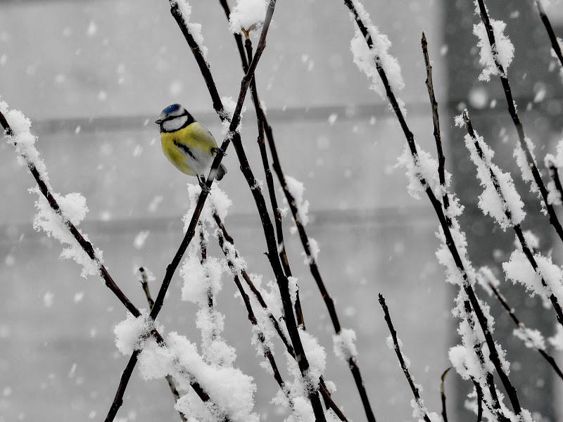 Cinciarella&Neve  di Capirizzo