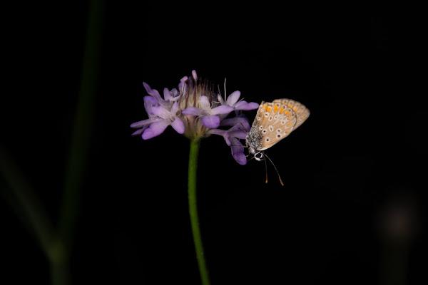The butterfly di stefania_albertazzi