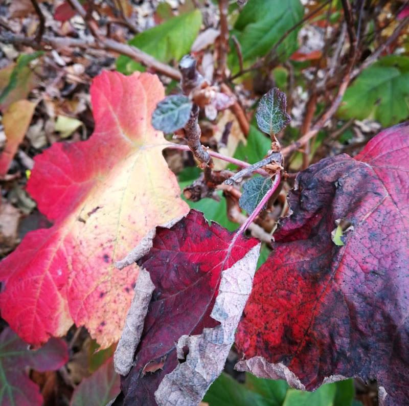 L'autunno dai mille colori di masaria24
