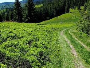 Photo: Jedna z licznych w Gorcach polan, to właśnie one tworzą niesamowity klimat tych gór.