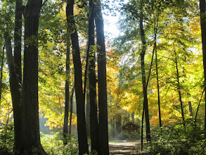Photo: Gorgeous autumn forest at Hills and Dales Metropark in Dayton, Ohio.