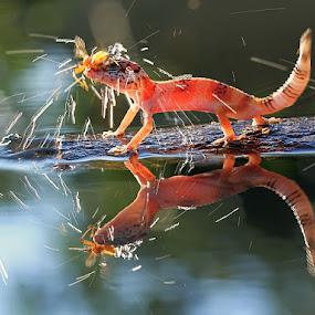 splash by Shikhei Goh II - Animals Reptiles