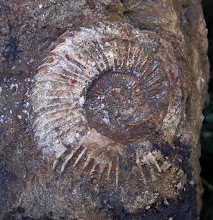 Photo: Boo Old Fossil!