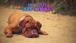 My Dog Ate What? thumbnail