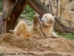 Photo: Hoch mit dem Ast ;-))