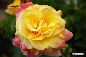 Photo: El nombre de la rosa - Castrogonzalo [2011]