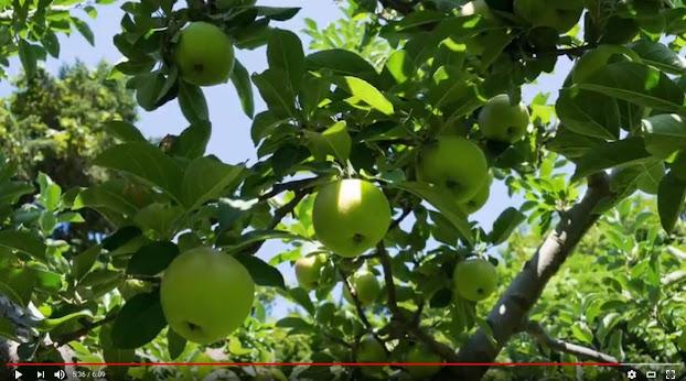 農福連携マルシェ2017・ノウフクマルシェ(Youtube  06:09)
