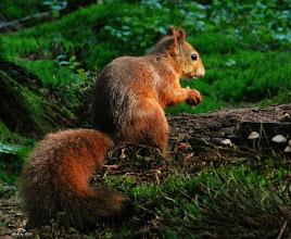 Photo: Nederland Natuur - eenkhoorn  Foto: Dick Dordrecht