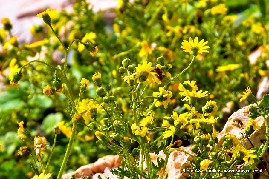 Цветы Израиля. Заповедник Нахаль Аюн. Экскурсия по Галилее.