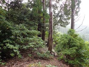 ここから灌木の藪に