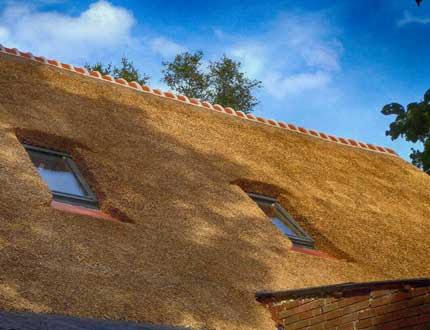 Dach trzcinowy z oknami dachowymi