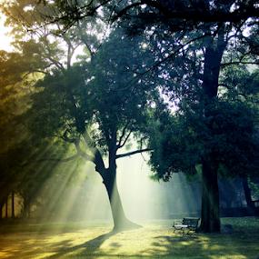 Nature at its best... by Shubhendu Bikash Mazumder - Nature Up Close Trees & Bushes ( nature, morning light, travel, sunlight,  )