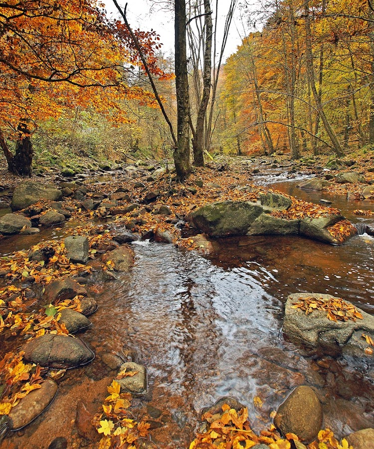 In Between by Siniša Almaši - Landscapes Forests ( water, nature, tree, autumn, color, forest, landscape, river,  )