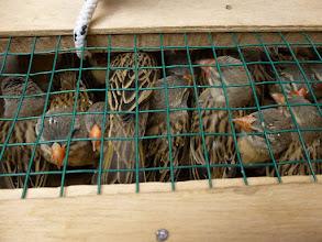 Photo: Sn5Ins0205-160202les oiseaux à vendre, Dakar, Kermel-marché, attente du bus P1040638