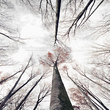 """Photo: Bonjour à tous, quelque chose de """"différent"""" aujourd'hui fait avec la nature du moment.  Feel free to check out my website: www.naturephotographie.com Happy week-end"""