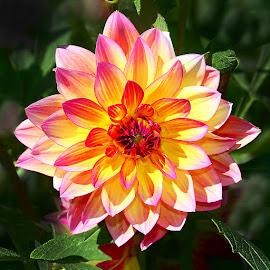Etoile dorée by Gérard CHATENET - Flowers Single Flower