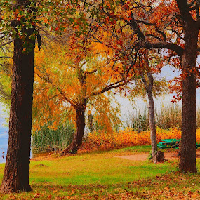 ---------- by Neal Hatcher - Nature Up Close Trees & Bushes ( fall leaves on ground, tranquil, fall leaves, nature, relax, colorful, color, fall, tranquility, relaxing,  )