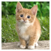 Cat and Kittens Pictures