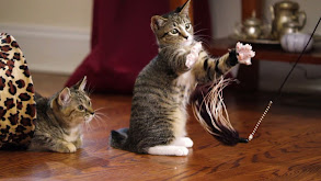 Kitten Beauties thumbnail