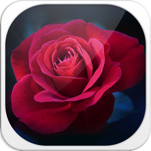 Night Rose Keyboard app (apk) free download for Android/PC/Windows