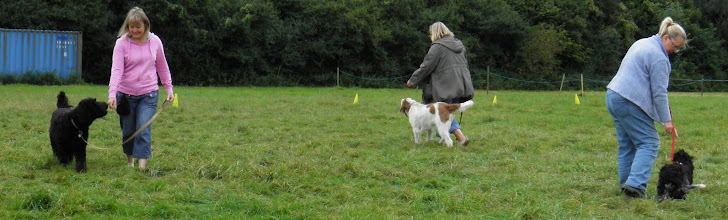Photo: Ralph Labradoodle with Lisa, Lotti Spinone with Sarah, Harvey Cocker with Pippa
