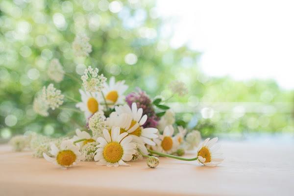 Bouquet di fiorellini di campo di mariateresatoledo