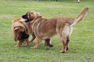 Photo: Nita & Ibanez en phase de jeu