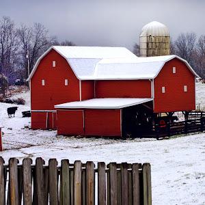 Helen.Aponte.Winter.Cow.1695a.jpg