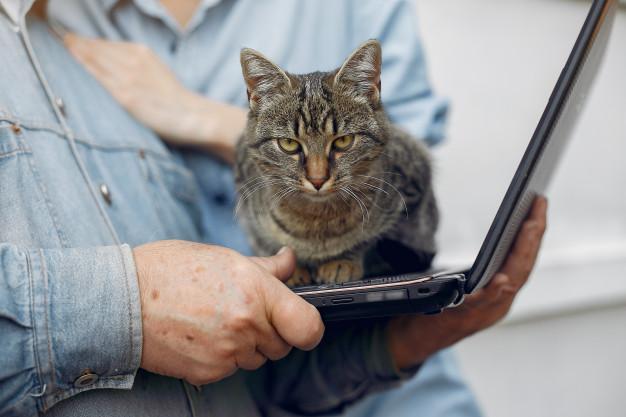Aplica la vacuna antirrábica a tus gatos