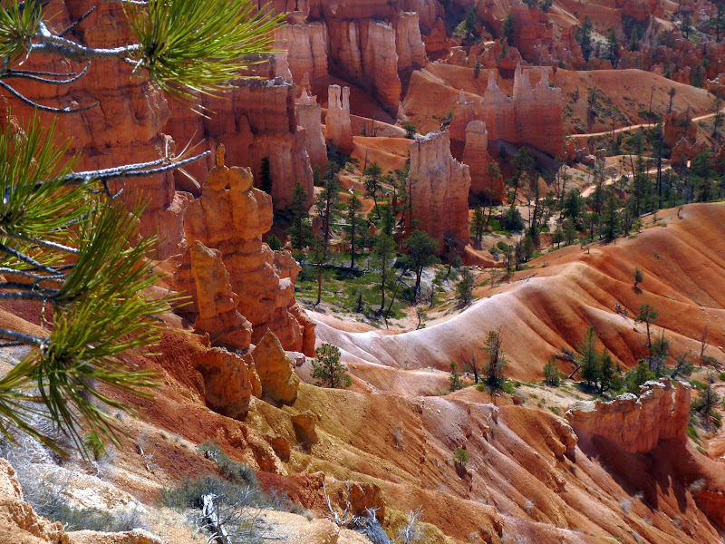 Photo: Looking down at the trees to give perspective of the size of the hoodoos in this amazing canyon.