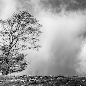 Alone in the wind by Emil Zaman - Black & White Landscapes ( moody, tree, clouds, wind, solitude )