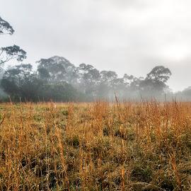 Fog In A Field by Geoffrey Wols - Landscapes Prairies, Meadows & Fields ( grass, cold, trees, mist, fog,  )