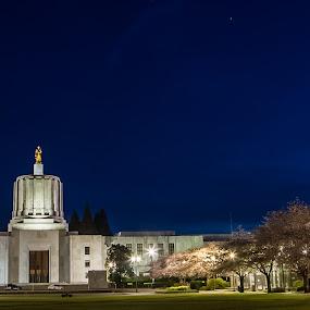 Capitol Twilight by Craig Pifer - Buildings & Architecture Public & Historical ( oregon capitol, cherry blossoms )