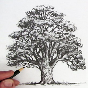 How To Draw Tree - náhled