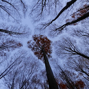 Sky forest by Other Side - Landscapes Forests ( sky, forest )