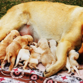 by Rajesh Kumar - Animals - Dogs Portraits