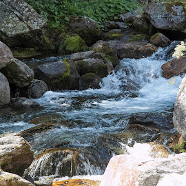Bosco Gurin, Ticino, Switzerland by Serguei Ouklonski - Nature Up Close Water ( rock - object, boulder, color, rapid, bright, tourism, scenic, freshness, sun, summer, scene, rock, stream - flowing water, stream, season, sunny, day, flow, scenics, smooth, no person, travel destinations, fair weather, motion, rapids, nature, switzerland, wet, clear, beauty in nature, water, stone, close-up, environment, sunlight, outdoors, ticino, light, geological formation, valley, tranquility, river, travel, splash, wild, no people, landscape, nature landscape )