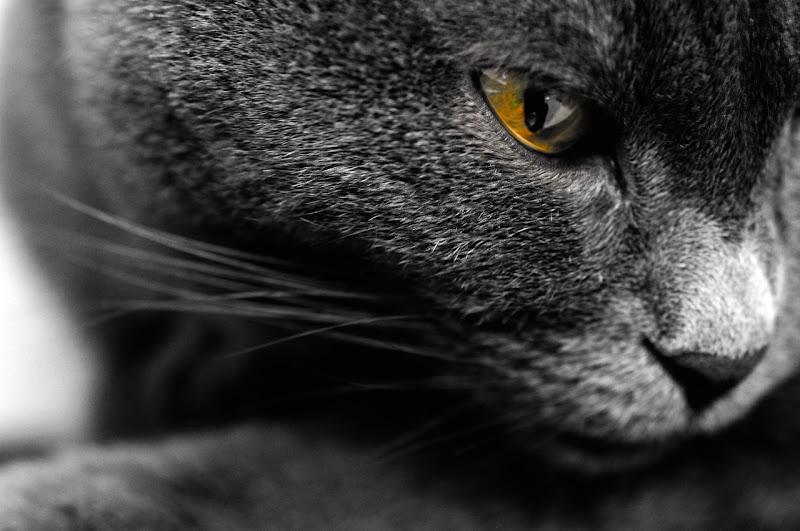 The Eye di photofabi77