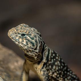 by Jarda Chudoba - Animals Reptiles