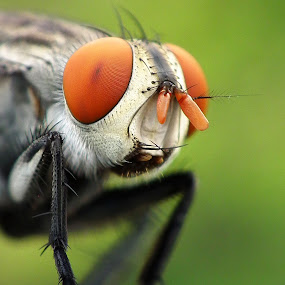 Hi, my Friend's by Dedi Bastiar Hasan - Animals Insects & Spiders