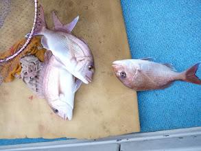 """Photo: 真鯛のトリプルは""""オオツさん""""!"""