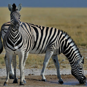 Striped Friends by Jan Jacobs - Animals Other