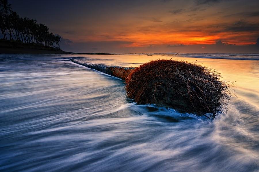 Tree of Motion by Eggy Sayoga - Landscapes Beaches ( tree, coconut, d7000, wave, 11-16mm, sunrise, beach, motion, nikon, tokina )