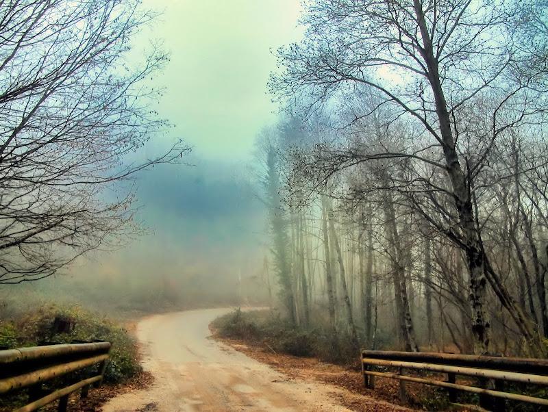 Mistic fog di francesco_abate
