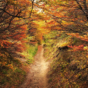 Autumn in Patagonia by My 1st Impressions - Landscapes Forests ( red, patagonia, autumn, fall, path, forest, yellow, leaves )
