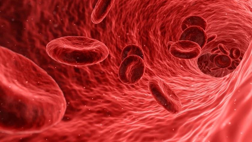 El sistema inmunológico es la defensa natural de nuestro organismo ante infecciones como virus o bacterias