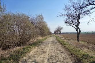 Photo: cesta po cyklotrase č.6116 směr Hrozová